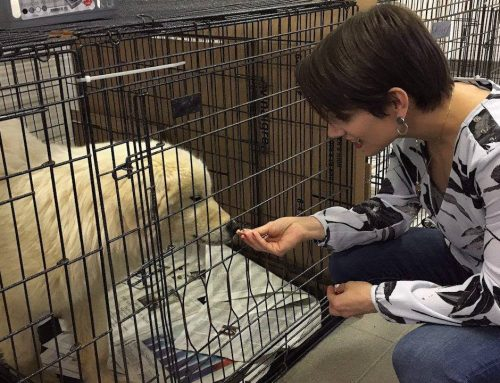 The Canadian Press – Meagan Duhamel helps greet pups removed from Korean dog farm.